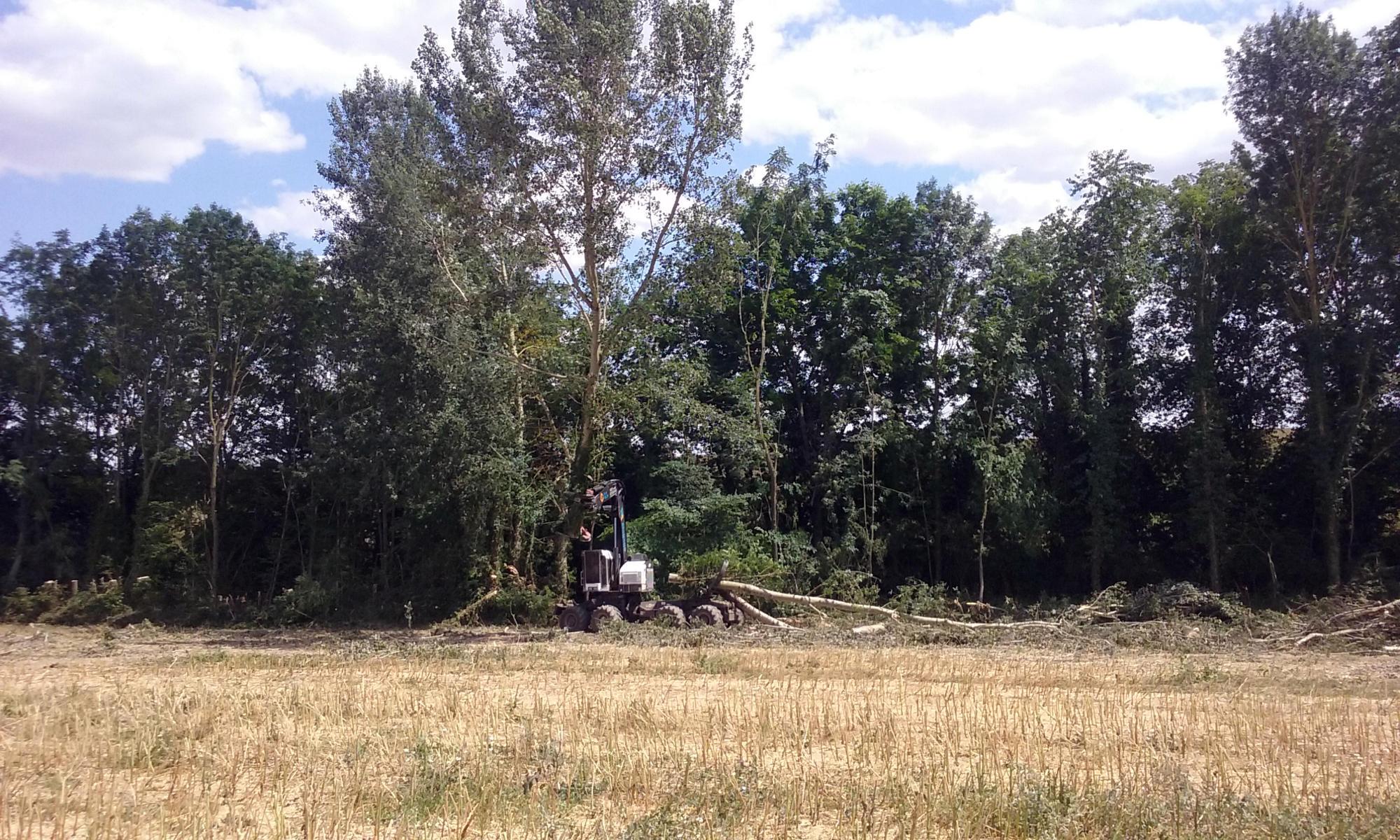 TimberPro dans les bois